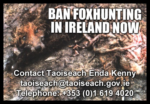 ban foxhunting in ireland now