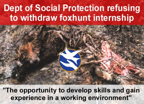 dept of social protection refusing to withdraw foxhunt internship copy