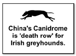China's Canidrome is death row for Irish greyhounds.jpg
