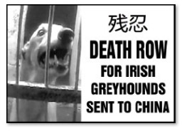 Death row for Irish greyhounds send to China (Black and White)