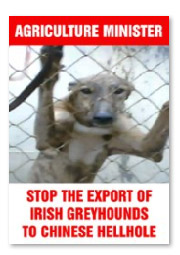 Stop the export of Irish greyhounds to Chinese hellhole colour.jpg