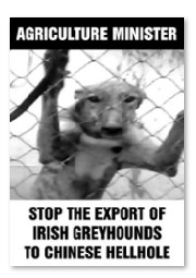Stop the export of Irish greyhounds to Chinese hellhole