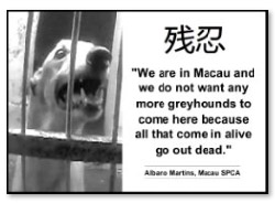 We are in Macau and we do not want any more greyhounds.jpg