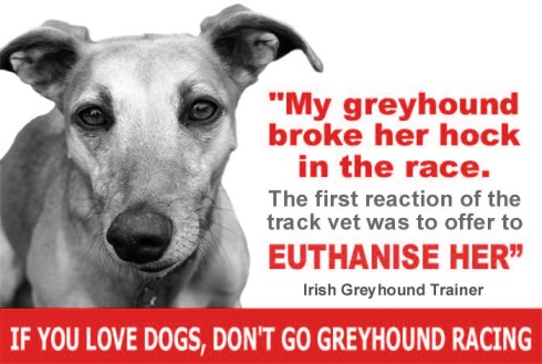 Tweet 'My greyhound broke her hock in the race. The first reaction of the track vet was to offer to euthanise her' Irish greyhound trainer