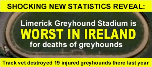 shocking new stats reveal limerick greyhound track worst for dog deaths