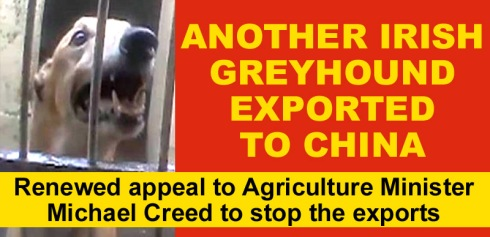 another irish greyhound exported to china.jpg