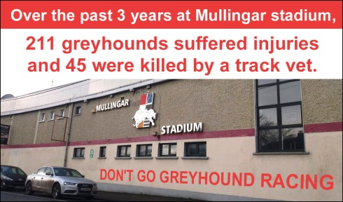 Over the past three years at Mullingar stadium, 211 greyhounds suffered injuries and 45 were killed by a track vet