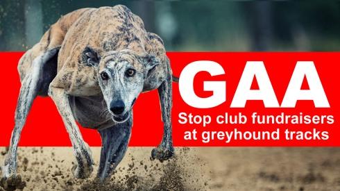 GAA Stop club fundraisers at greyhound tracks b