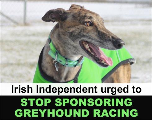 Irish Independent urged to stop sponsoring greyhound racing