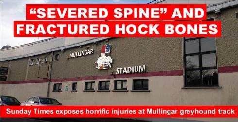 SEVERED SPINE mullingar greyhound track.jpg