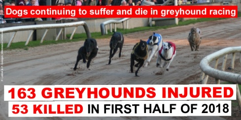 greyhounds continuing to suffer and die 2018