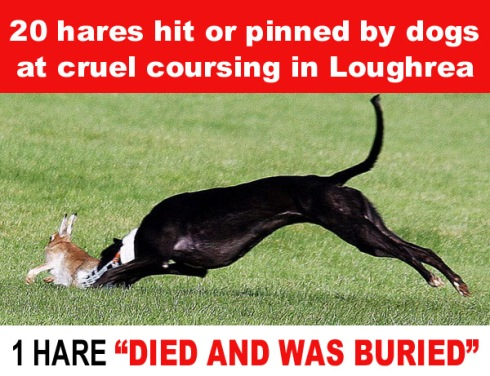 Loughrea coursing 13 hares hit