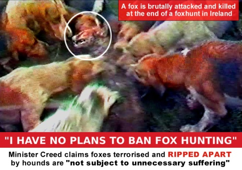 Minister creed claims foxes terrorised are not subject to suffering