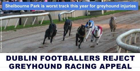 DUBLIN FOOTBALLERS REJECT GREYHOUND RACING APPEAL.jpg