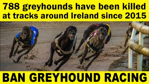 715 greyhounds killed since 2015 960 540 2021 jan to june update