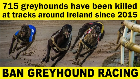 715 greyhounds killed since 2015 960 540 copy