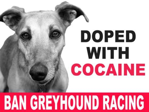 BANNER doped with cocaine ban greyhound racing-640x480