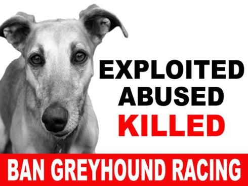 Placard - Exploited Abused Killed Ban Greyhound Racing-640x480.jpg