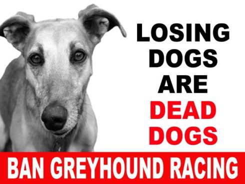 PLACARD losing dogs are dead dogs ban greyhound racing-640x480