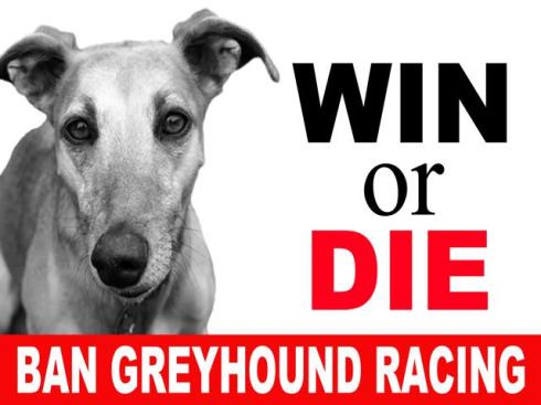 placard win or die ban greyhound racing-640x480