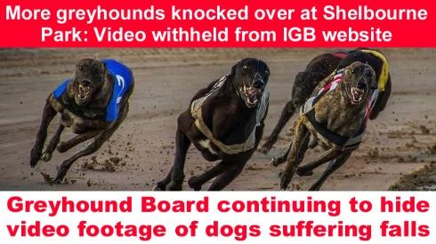 hiding footage shelbourne park copy