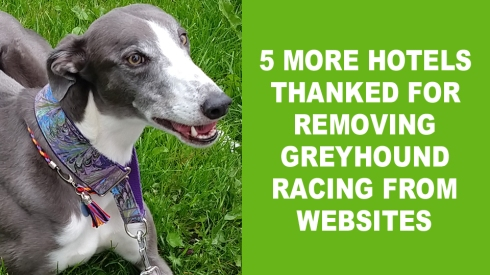 5 more hotels remove greyhound racing copy