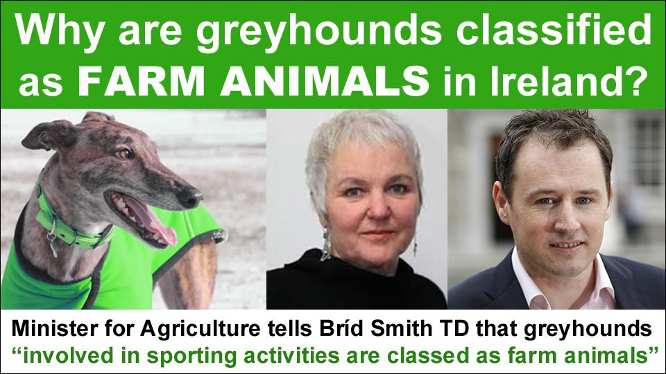 brid smith greyhounds farm animals copy