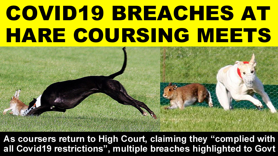 COVID 19 BREACHES AT COURSING MEETS copy