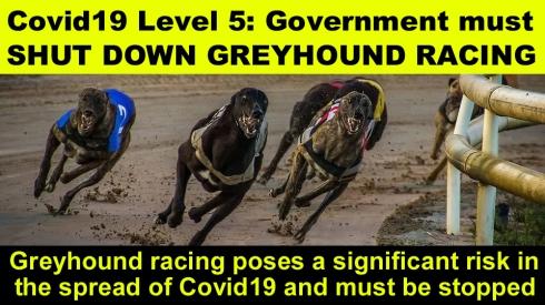 COVID19 LEVEL 5 Govt must shut down greyhound racing copy