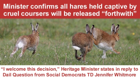 minister confirms all hares to be released copy