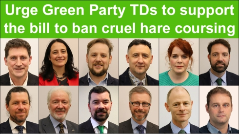 green party urged to back a ban on coursing copy