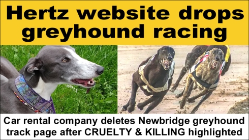 Hertz drops greyhound racing copy