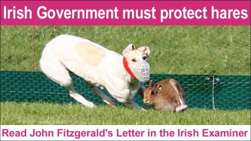 irish govt must protect hares