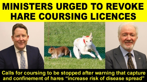ministers urged to revoke coursing licences copy