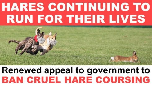 HARE Coursing 2021 WEEK 5 copy